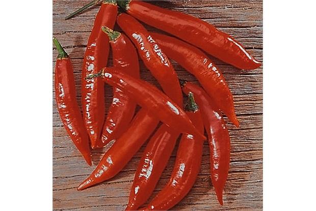 Sementes de Pimenta Picante Malagueta - Feltrin